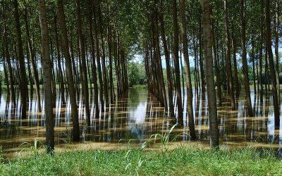 Estudio impacto medioambiental de las defensas contra inundaciones de ríos